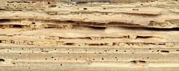 Công ty diệt mối ở Quảng Trị: Mối phá hoại những đồ dùng bằng gỗ