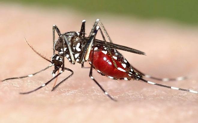 Công ty diệt muỗi tại Nghệ An: Muỗi sinh trưởng như thế nào?