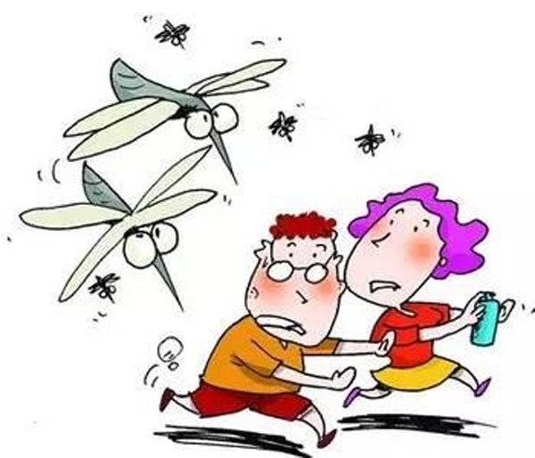 Công ty diệt muỗi tại Quảng Bình: Làm sao để phòng tránh sốt xuất huyết