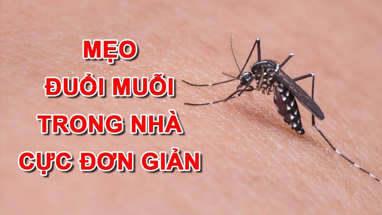 Tìm hiểu những cách đuổi muỗi cực kỳ hiệu quả cho cả nhà vào ngày mưa
